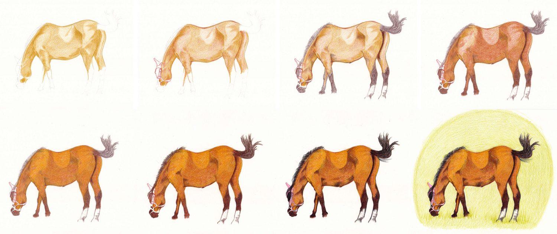 Schrittanleitung: Pferd zeichnen mit Buntstift