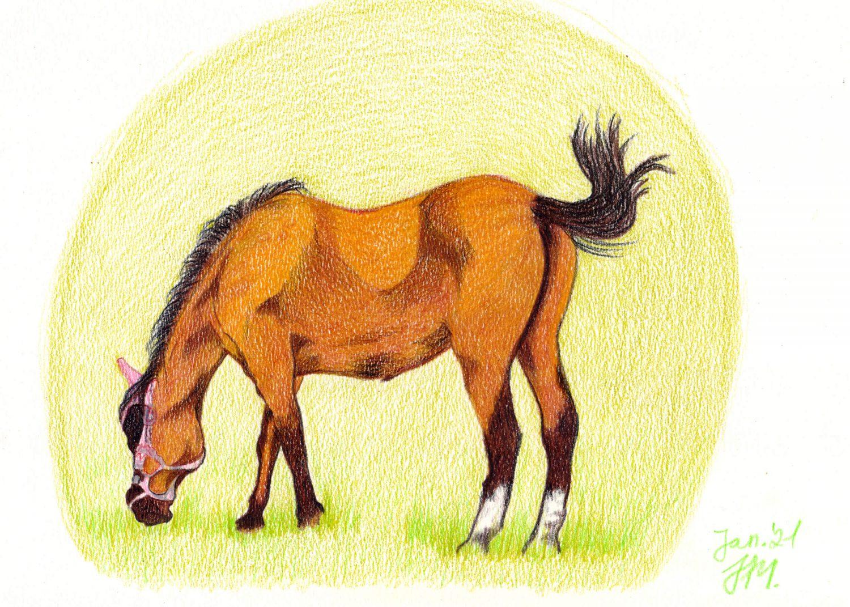 Fertige Pferde Buntstiftzeichnung