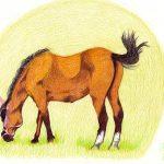 Pferd zeichnen mit Buntstiften