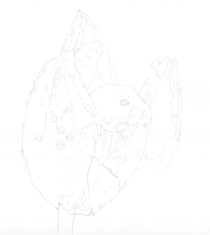 Maus in Tulpe zeichnen: Bleistiftskizze