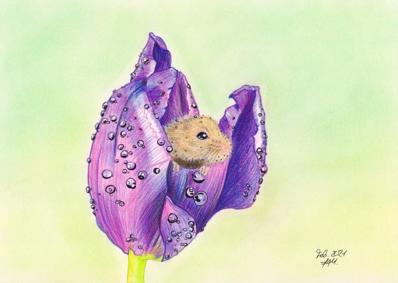 Maus in Tulpe zeichnen: Fertige Buntstiftkolorierung