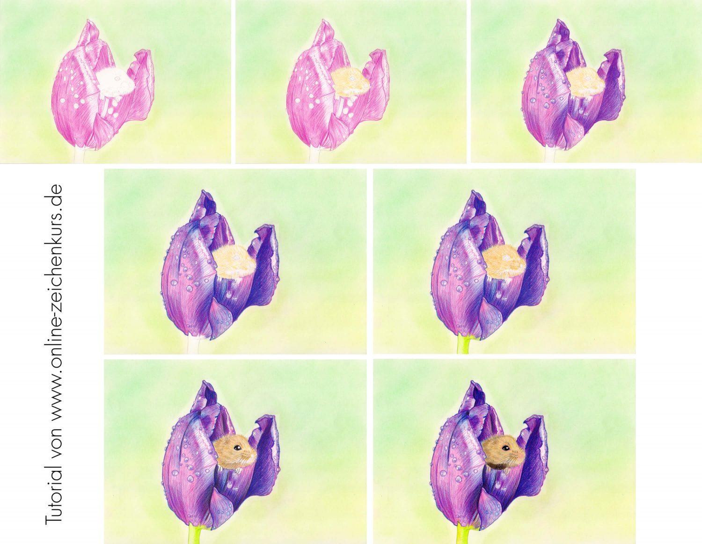 Maus in Tulpe zeichnen: Buntstiftkolorierung in einzelnen Schritten