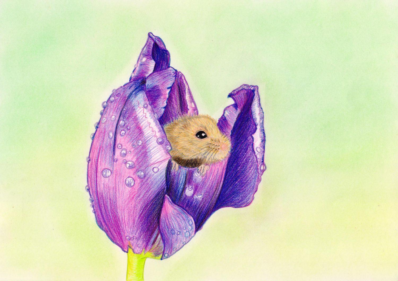 Maus in Tulpe zeichnen: fertige Buntstiftkolorierung mit Spray versiegelt