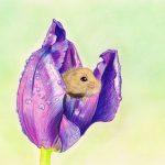 Süße Maus in Tulpe zeichnen mit Buntstiften