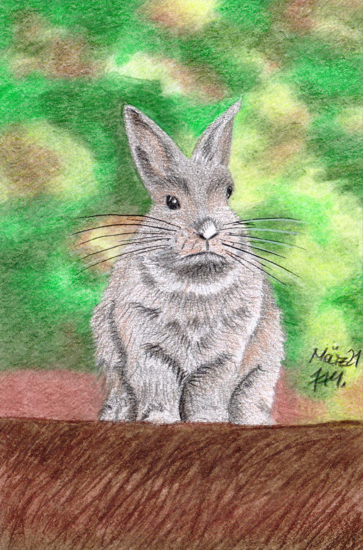 Graues Kaninchen zeichnen: Fertige buntstiftkolorierung