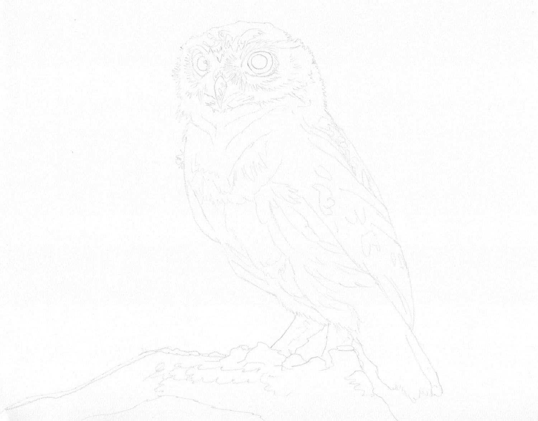 Kauz zeichnen: Bleistiftskizze