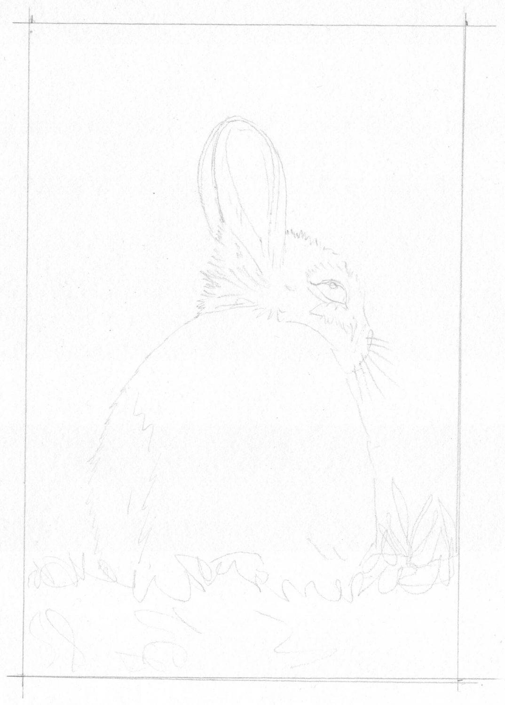 Braunes Kaninchen malen Bleistiftskizze