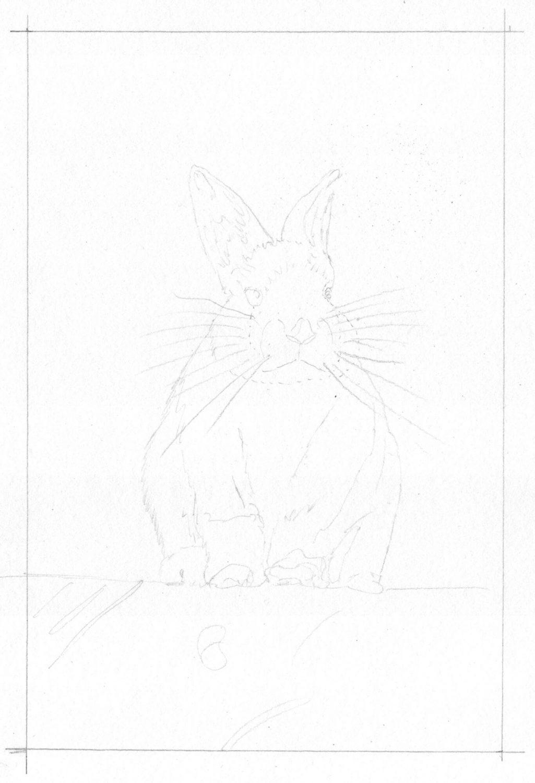 Graues Kaninchen zeichnen: Bleistiftskizze