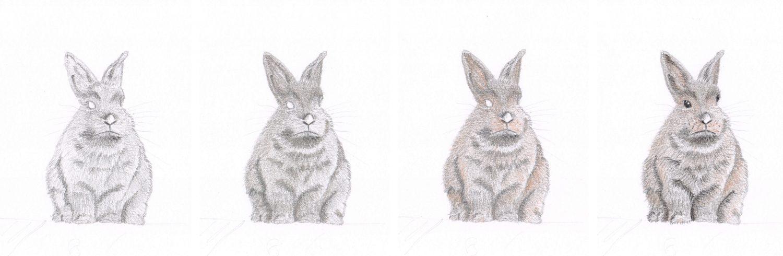 Graues Kaninchen zeichnen: Schritt für Schritt