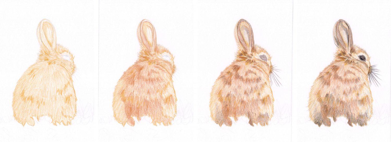 Braunes Kaninchen malen Schritt für Schritt