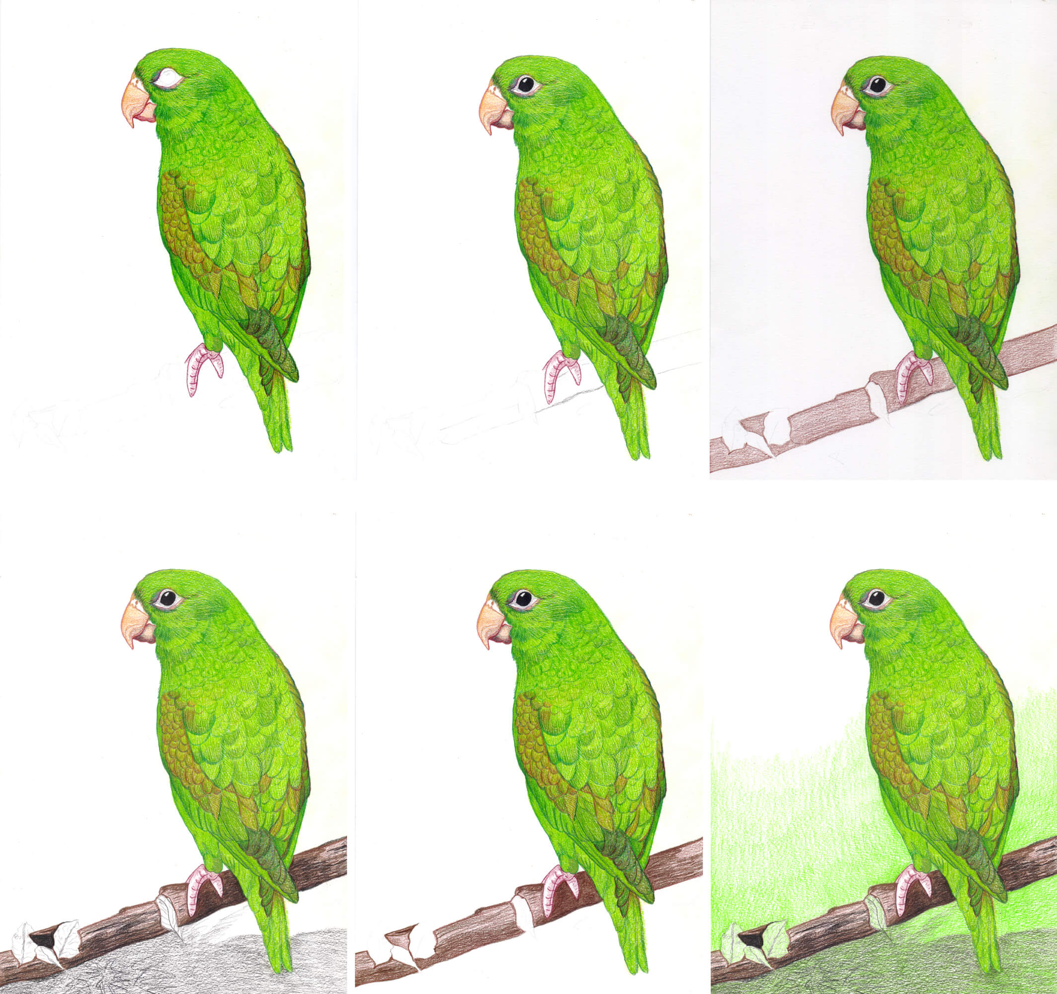 Grüner Papagei zeichnen mit Buntstiften