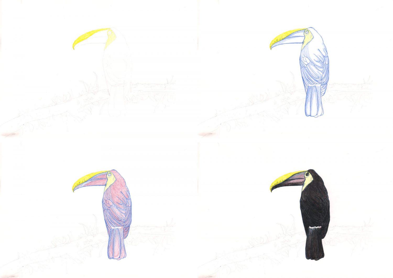 Tucan zeichnen mit Buntstiften 1