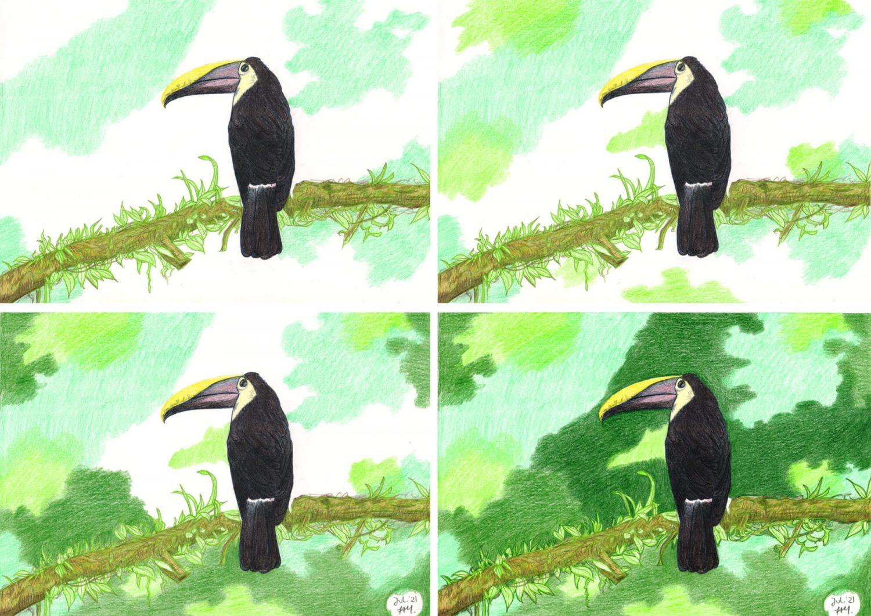 Tucan zeichnen mit Buntstiften 3