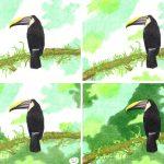 Tucan zeichnen mit Buntstiften