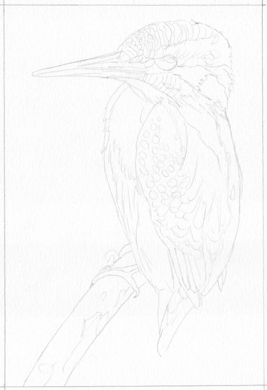 Eisvogel Bleistiftskizze
