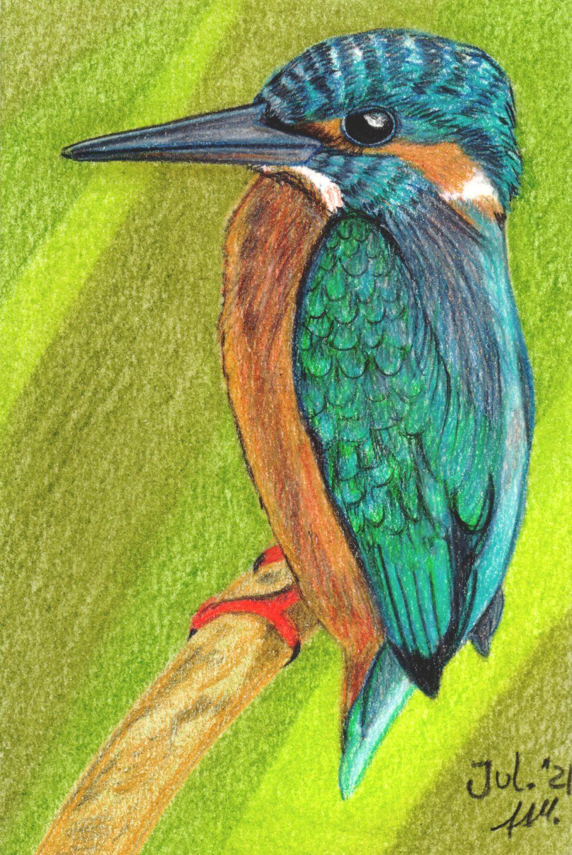 Eisvogel Buntstiftkolorierung fertig
