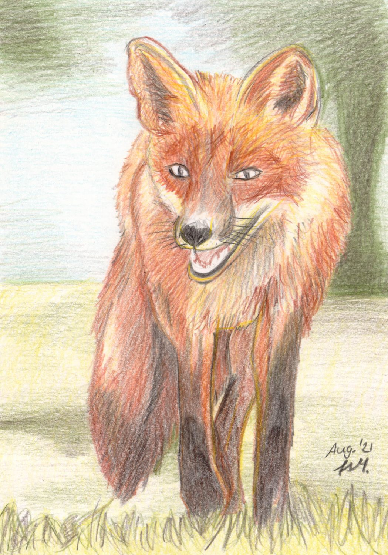 Fuchs zeichnen mit Buntstiften - Fertige Buntstiftzeichnung