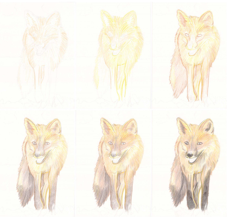 Fuchs zeichnen mit Buntstiften: Schritt für Schritt 1