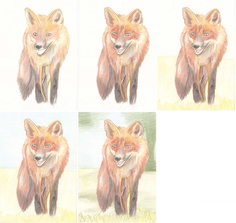 Fuchs zeichnen mit Buntstiften: Schritt für Schritt 2