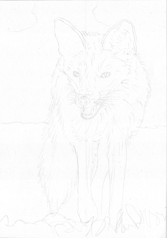 Fuchs zeichnen Bleistiftskizze