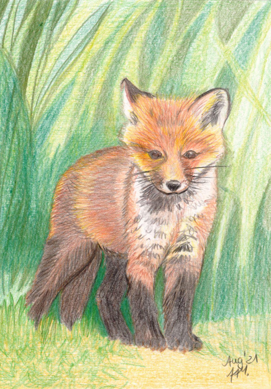 Fuchswelpe zeichnen mit Buntstiften - Fertige Buntstiftzeichnung