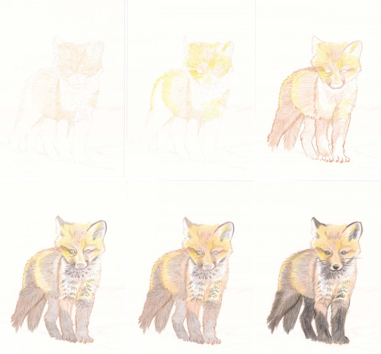 Fuchswelpe zeichnen mit Buntstiften - Schritt für Schritt 1