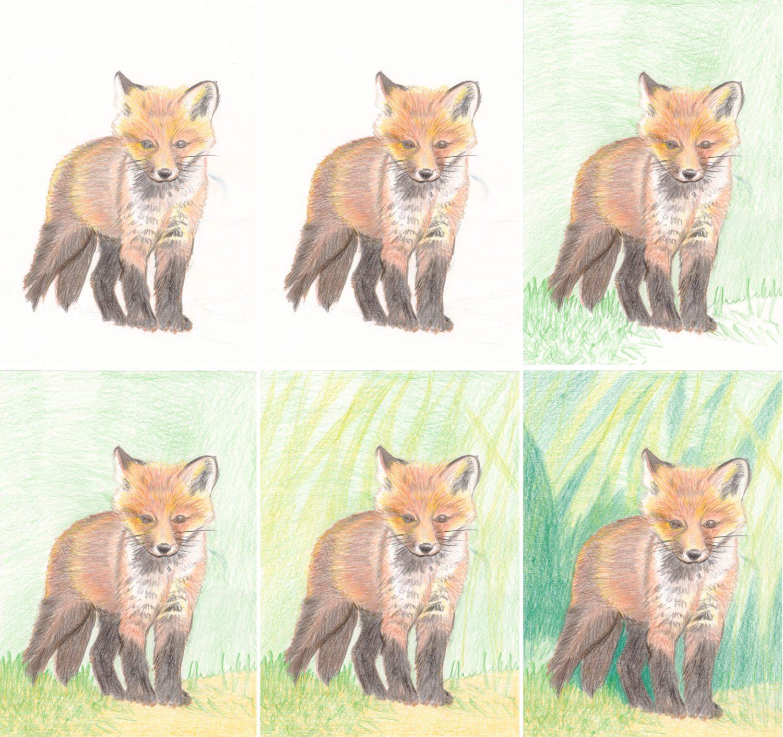 Fuchswelpe zeichnen mit Buntstiften - Schritt für Schritt 2