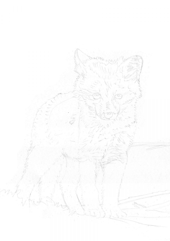 Fuchswelpe zeichnen Bleistiftskizze