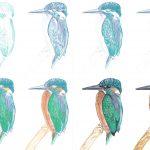 Eisvogel zeichnen mit Coloré Buntstiften