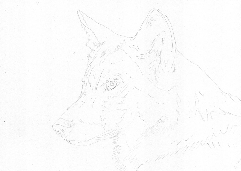 Bleistiftskizze: Wolf Portrait